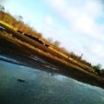 """Dagens mobilskud - 24-mar-11(Fordele & ulemper ved at løbe på landet) • <a style=""""font-size:0.8em;"""" href=""""http://www.flickr.com/photos/30404505@N02/5555579859/"""" target=""""_blank"""">View on Flickr</a>"""